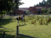 schwarme nodhorn severinghausen 012